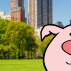 Post a pic out with a pig and get a FREE NumberBarn TShirt