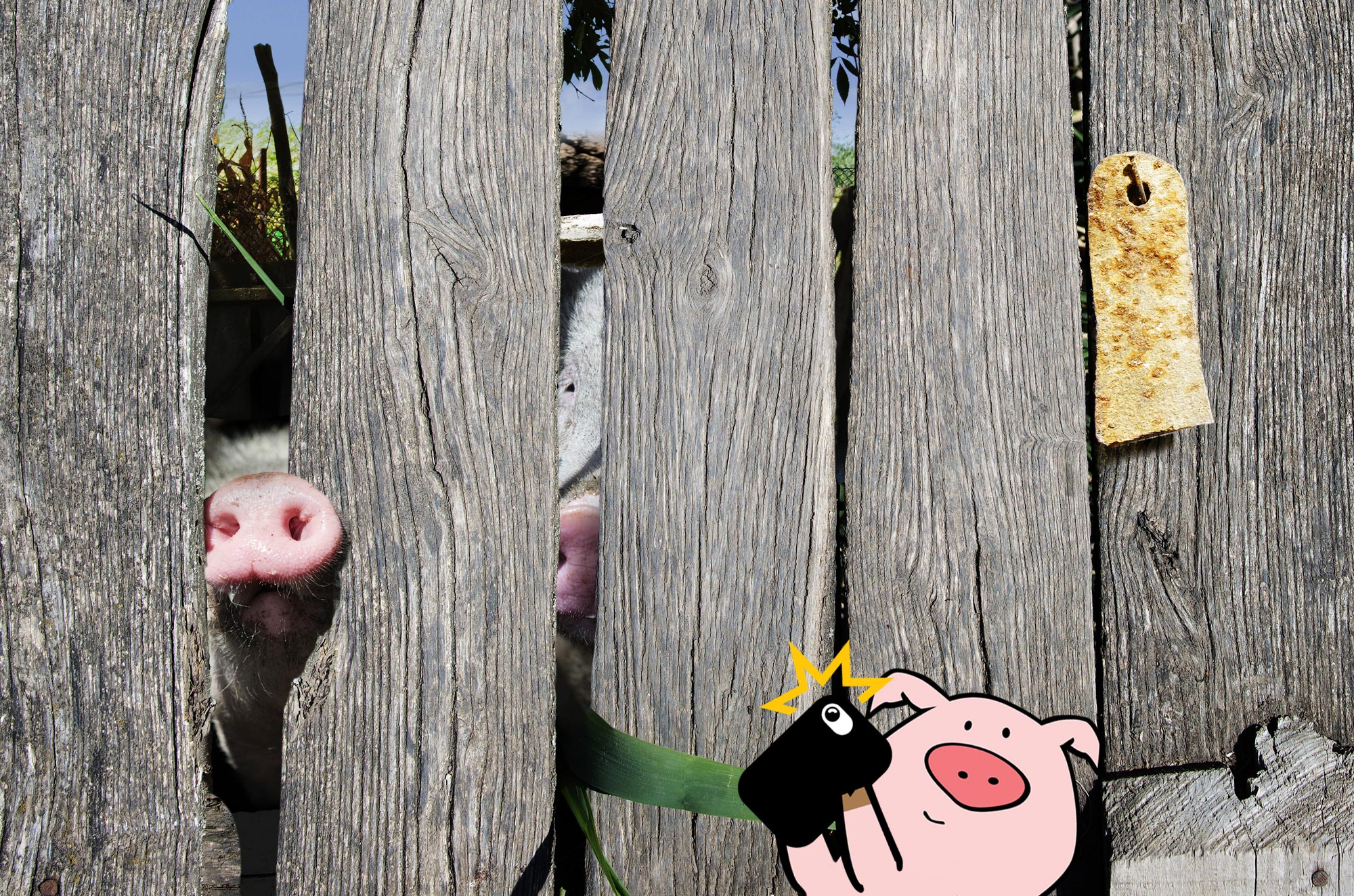 Post a pig pic, get a FREE NumberBarn T-Shirt