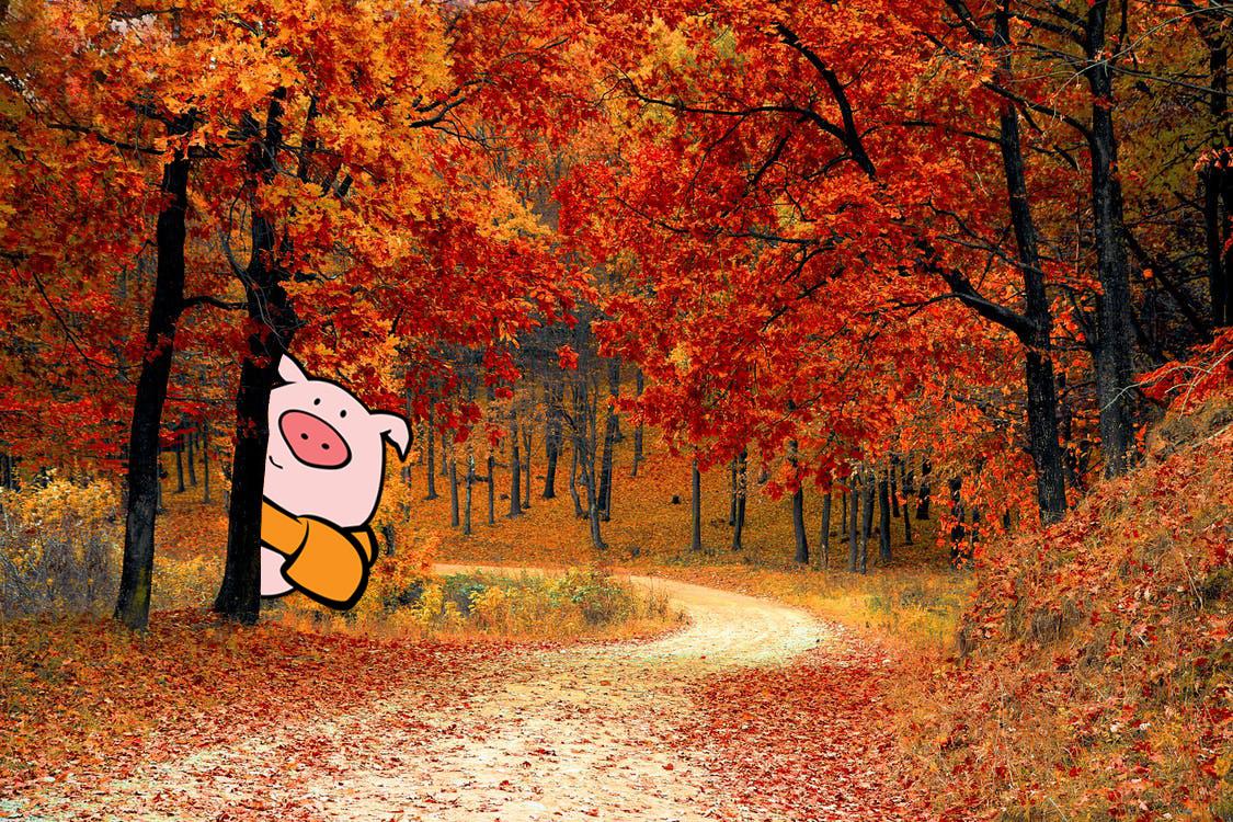 Top 5 Seasonal Fruit & Veggie Picks for Fall from The Pig