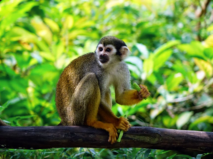 William Patterson: Saving Money & Monkeys on a Preserve in Costa Rica