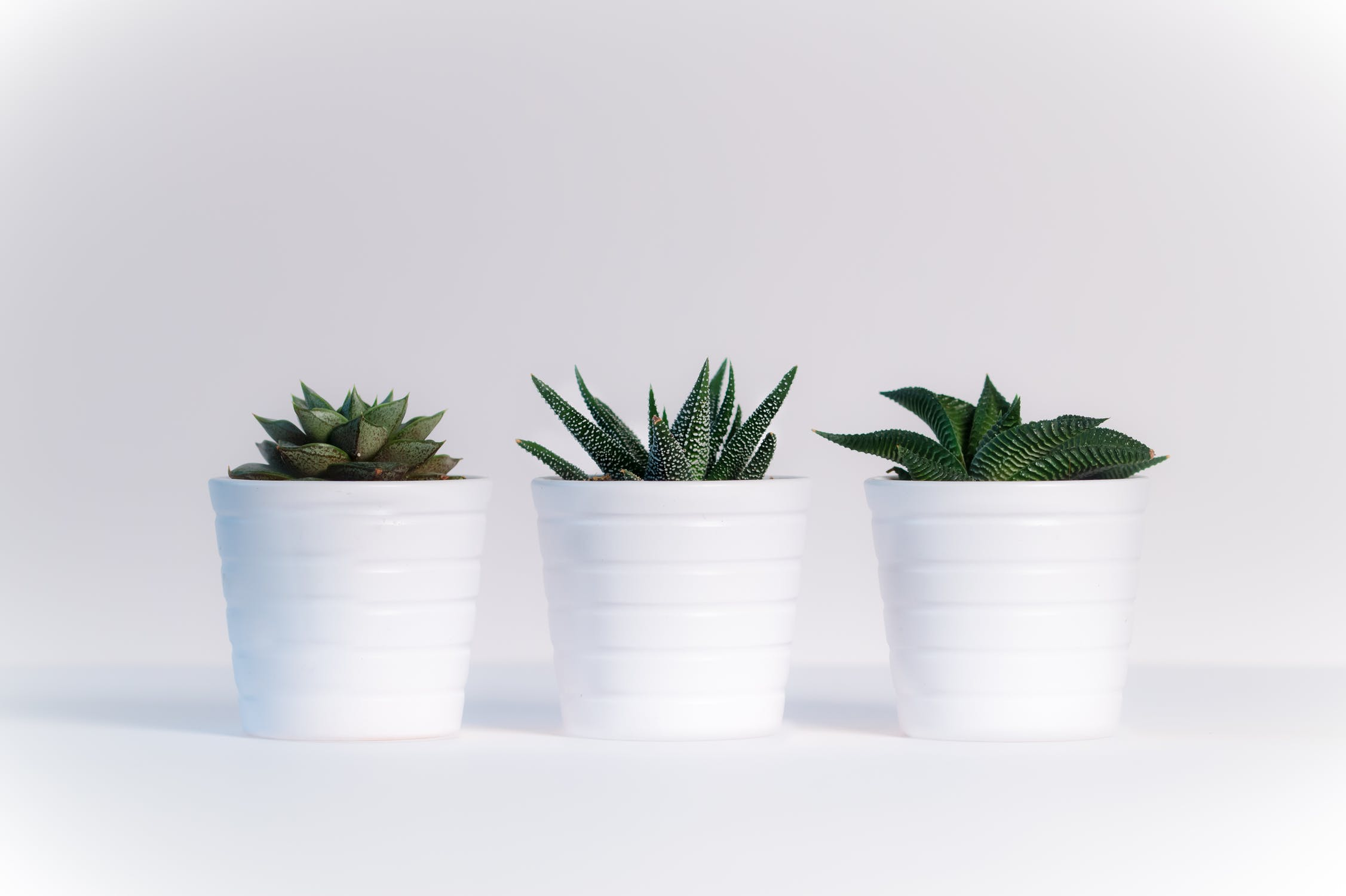 Why Plants at the Office Mean More Green in your Wallet