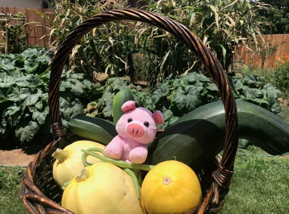 7 Farm Fresh Zucchini Recipes